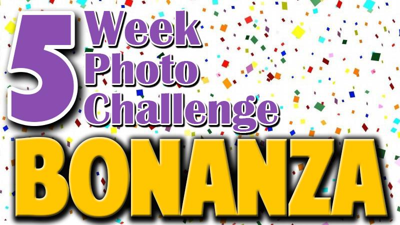 bonanza-cover-image