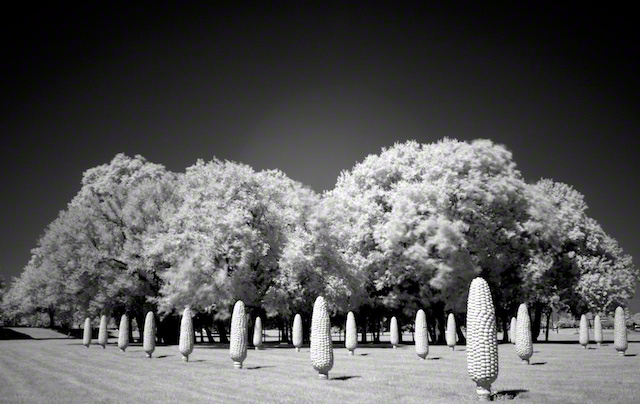 """Cement Cornfield"" by Aaron Sheldon. Shot with Canon XTi with Hoya r72 External IR Filter."