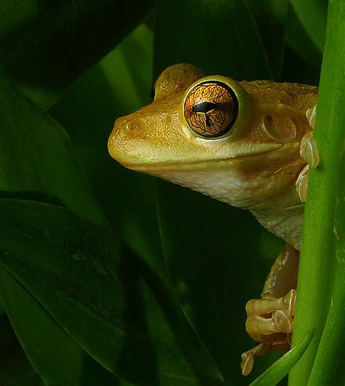 goldfrog3