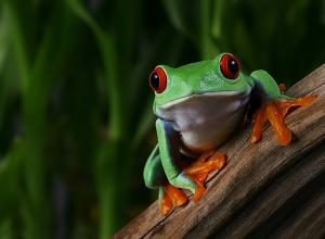 macro_frog