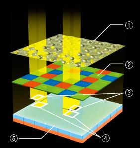 The beauty of the Fujifilm X-Trans sensor